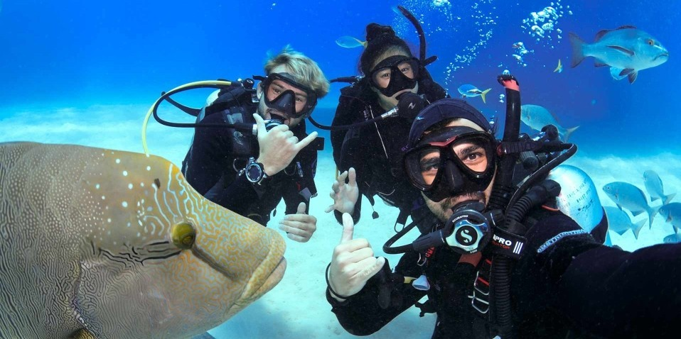 Learn to Dive Course - 4 & 5 Days - Divers Den
