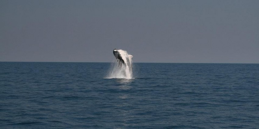 Whale Watching - Ocean Eco Adventures